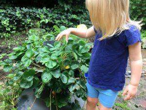 Backyard Greenhouse Basics - Baby Steps