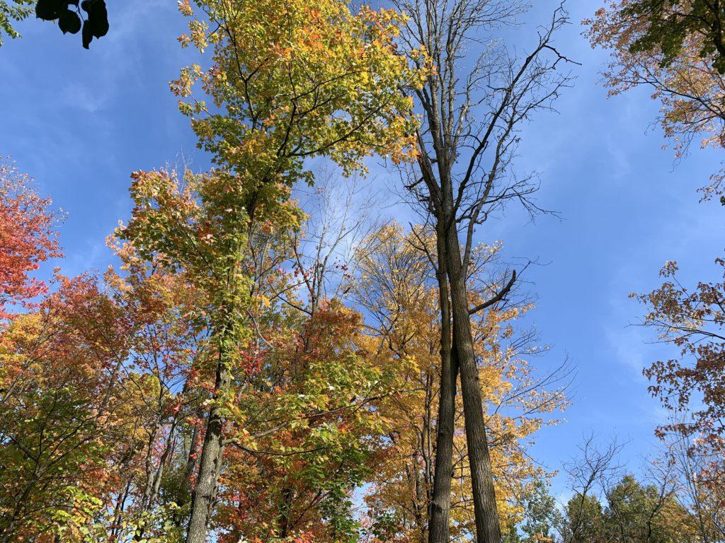 forest school activities, toddler forest school, forest preschool ideas, outdoor learning, outdoor classroom ideas